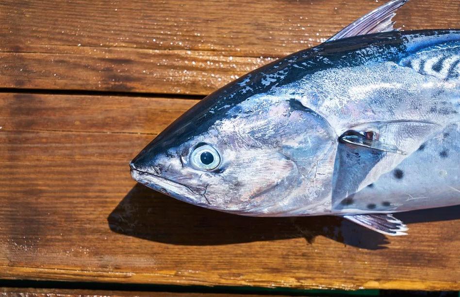 akcesoria do ryb